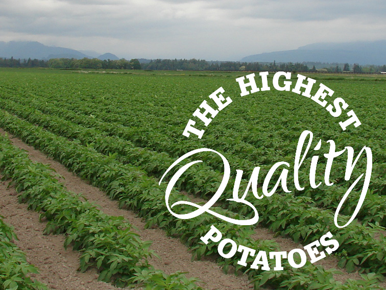 Potatoes Grow in Fertile Skagit Valley Soil